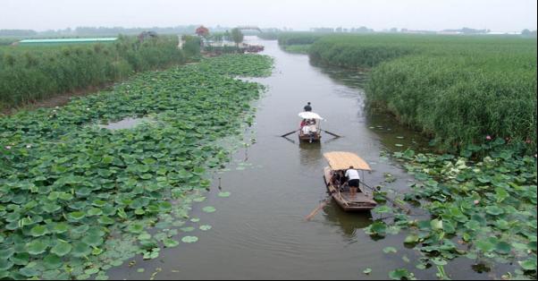 白洋淀是中国海河平原上最大的湖泊.又名西淀,古称掘鲤淀.